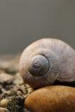 Escargot et pierre Photos stock