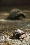 Escargot et tortue image stock