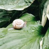 Escargot photos stock