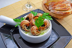 Escargot, French Culture. Traditional French Snails with garlic sauce Royalty Free Stock Photo