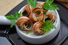 Escargot, French Culture. Traditional French Snails with garlic sauce Stock Photos