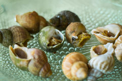 Escargot French for snail Stock Image