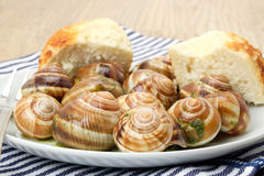 Escargot - French snails with a garlic and herb sauce Royalty Free Stock Images