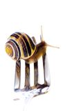 Escargot fresco Fotografía de archivo libre de regalías