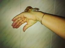 Escargot glissant sur une main photos stock