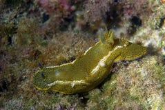 Escargot jaune Image stock