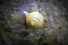 Escargot jaune Photos libres de droits