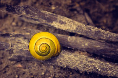 Escargot jaune Photographie stock libre de droits