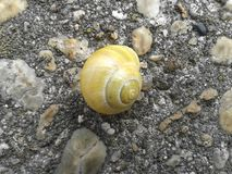 Escargot jaune sur la pierre Photo libre de droits