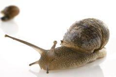 Escargot lent Image libre de droits