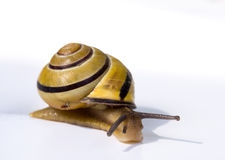 Escargot lent Images stock