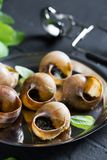 escargot Lumache di Borgogna con il burro di aglio immagine stock