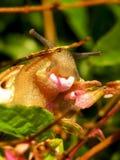 Escargot mangeant une fleur photos libres de droits