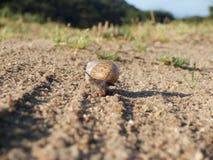 Escargot marchant le long d'une route Photos stock