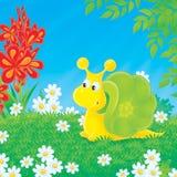 Escargot marchant sur la clairière verte Photos libres de droits
