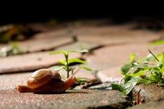 Escargot marchant sur le chemin en pierre avec l'atmosphère verte de faible luminosité d'arbres photos stock