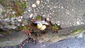Escargot montant 3 Photos libres de droits