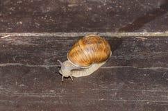 Escargot passant les lamelles en bois Image libre de droits