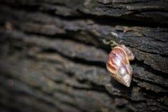 Escargot passant une roche photographie stock libre de droits