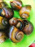 Escargot on plate Stock Images
