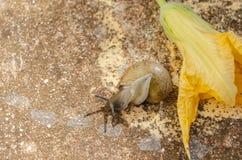Escargot près du retournement de fleur images stock