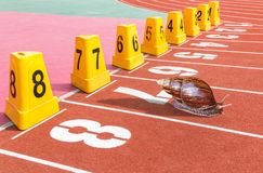 Escargot prêt sur la voie courante de début pour la concurrence dans le stade Photographie stock