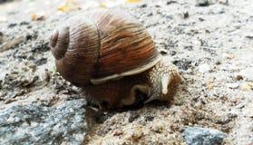 Escargot rampant au sol Escargot mignon Photo libre de droits