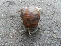 Escargot rampant au sol Escargot mignon Photo stock