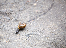 Escargot rampant sur la route Photographie stock libre de droits