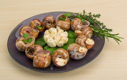Escargot Stock Photography