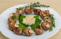 Escargot Royalty Free Stock Photos