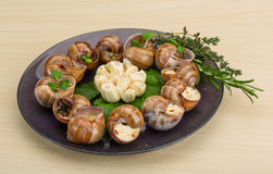 Escargot Stock Image