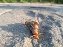 Escargot rouge Photos stock