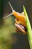 Escargot s'élevant jusqu'au dessus d'une centrale Photographie stock libre de droits