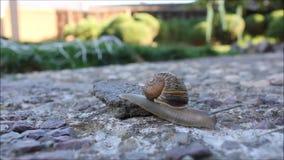 Escargot s'élevant outre de la pierre clips vidéos