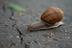 Escargot s'occupant de l'it& x27 ; affaires de s Photo stock
