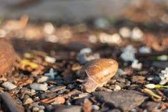 Escargot se déplaçant sous la lumière du soleil Images libres de droits