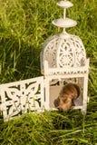Escargot se reposant dans la lampe Images libres de droits
