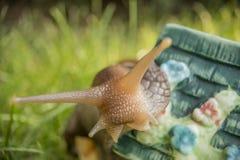 Escargot se reposant dans le jardin sur la théière Image libre de droits
