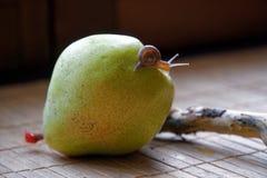 Escargot se reposant sur le tronc vert de poire et d'arbre et rampements au brocoli, contexte en bambou en bois, fond animal en g photo libre de droits