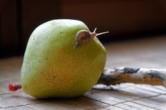 Escargot se reposant sur le tronc vert de poire et d'arbre et rampements au brocoli, contexte en bambou en bois, fond animal en g image stock