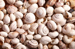 Escargot-seashells image stock