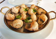 Escargot served. Escargot or snails served on a tray in a restaurant royalty free stock photo