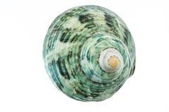 Escargot Shell image libre de droits