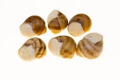 Escargot, shell do escargot com manteiga e close up das especiarias no fundo branco fotografia de stock royalty free