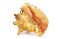 escargot simple Pacifique Habitant de mer Nature magnifique photographie stock