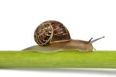 Escargot simple sur une cheminée Photo stock