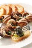 Escargot snails en labourguignonne royaltyfria foton