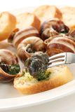 Escargot, snails a la bourguignonne Stock Photo