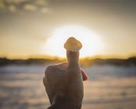 Escargot|Sun photos stock